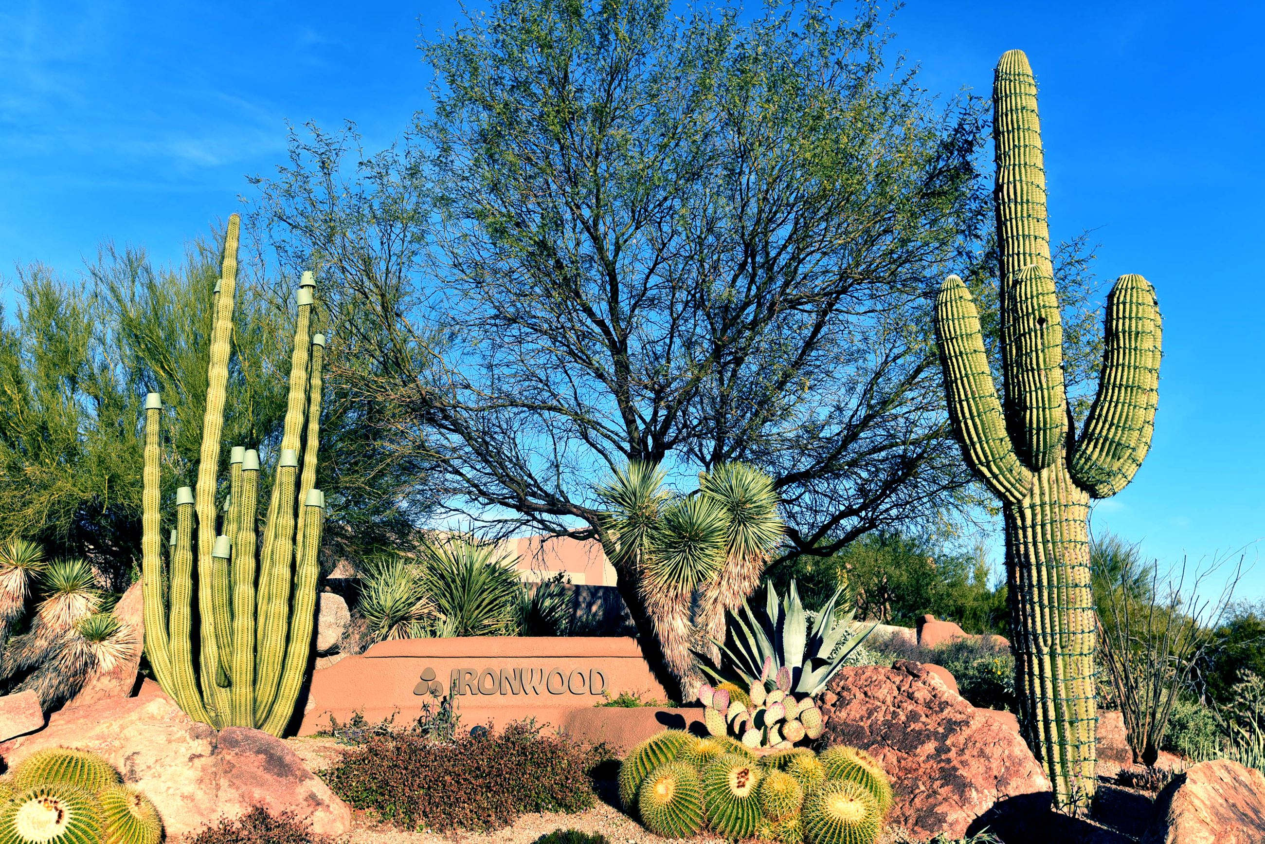 Ironwood Gate with cacti and blue sky